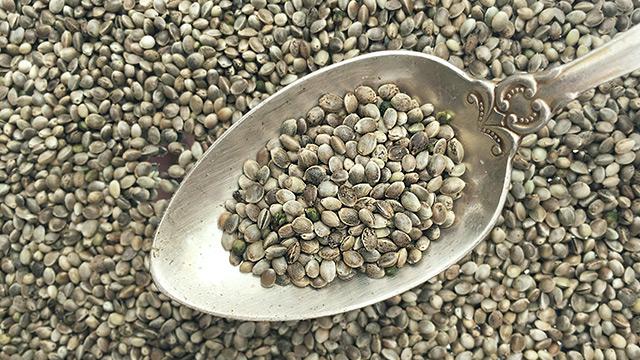 Семена конопли тестостерон конопляное семя народная медицина